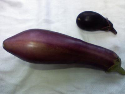 ていざなす 伝統野菜
