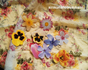 手紙お花カード2