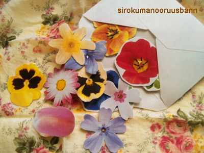 手紙お花カード