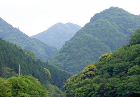 シャクナゲの自生する山を遠望する