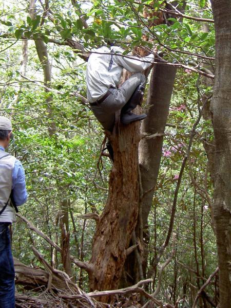 枯れ木に登って写真を撮る