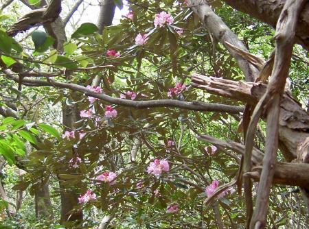 この木には花が多い