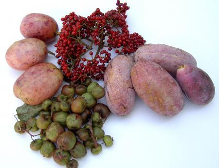 山の幸、野生果実のいろいろ