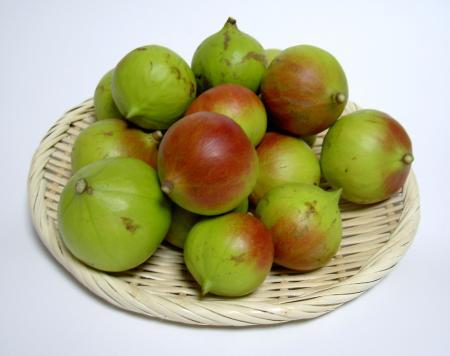 オオアブラギリの果実