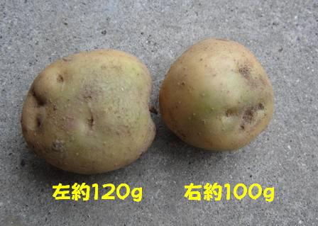 男爵 緑化(ソラニン)