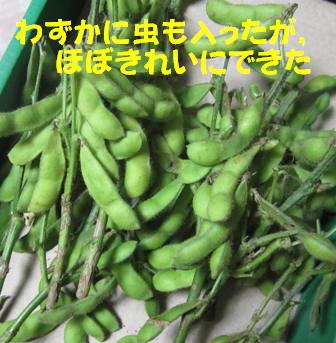 エダマメ (3)