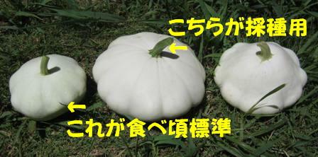 UFO大きさ比べ