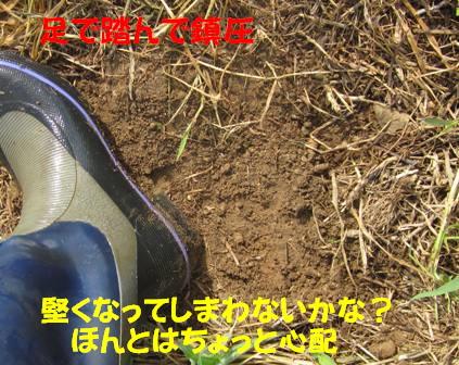 キュウリ (4)