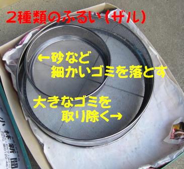 金ゴマ収穫 (4)