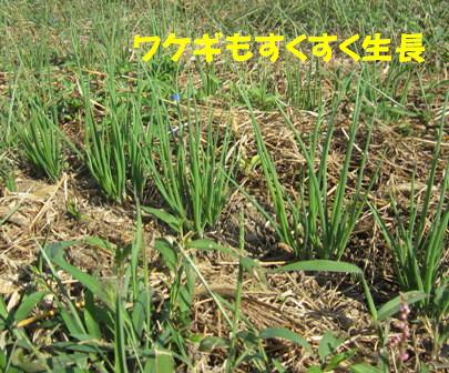 農園2012.10 (6)