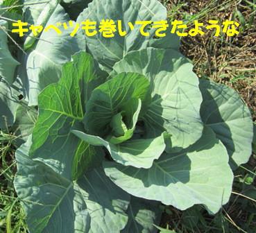 農園2012.10 (2)
