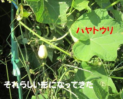 農園2012.10.10