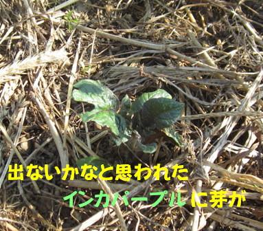 農園2012.10 (4)