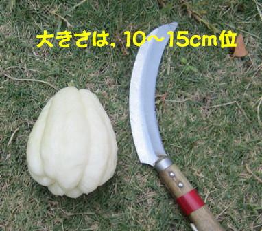 ハヤトウリ (4)