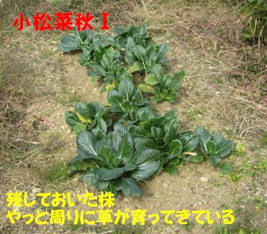 小松菜 Ⅰ