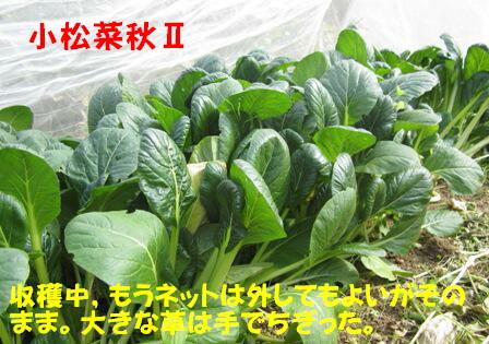 小松菜 Ⅱ