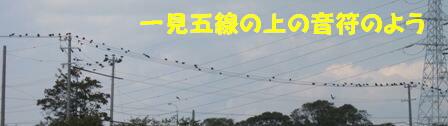 カラスの群れ (2)
