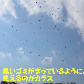 カラスの群れ (1)