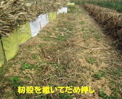 エンドウ風よけ (5)