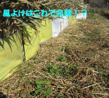 エンドウ風よけ (4)