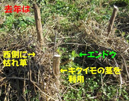 エンドウ風よけ (1)