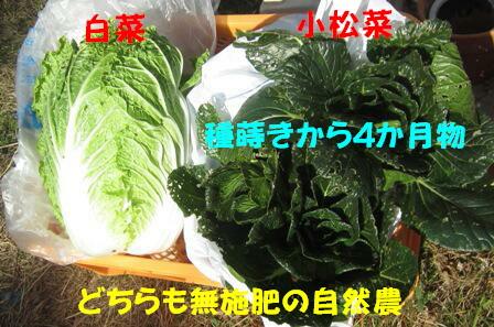 白菜・小松菜