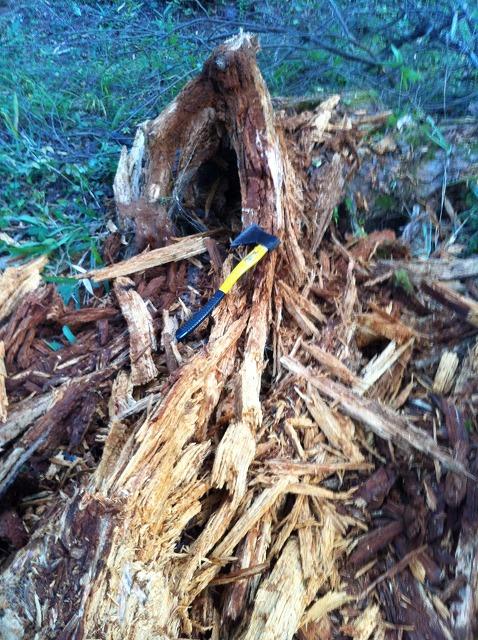 倒木破壊後