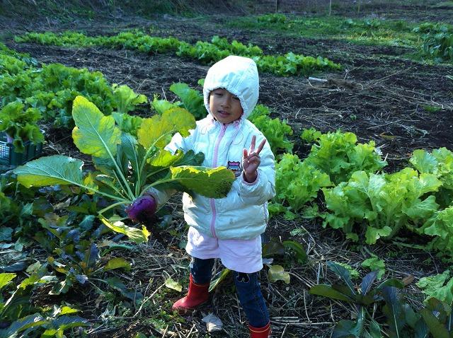 支温、収穫手伝い