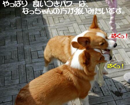 2013032003.jpg