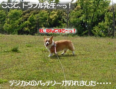 2013051505x.jpg