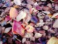 fallen-leaves-on-the-ground.jpg