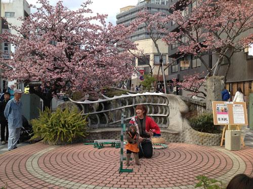 あたみ桜 糸川桜祭り