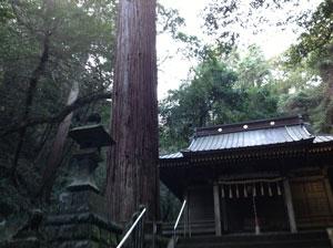 伊豆高原八幡宮来宮神社