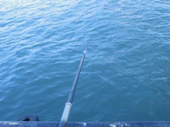 釣り糸たらん