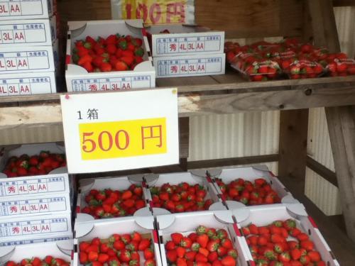小粒イチゴ