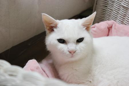 普通の猫である