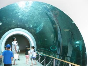 琵琶湖博物館 009