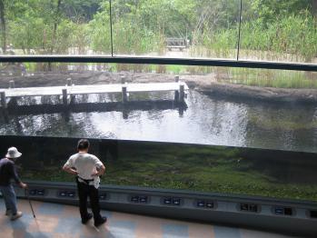 琵琶湖博物館 008