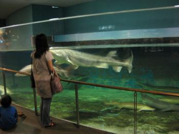琵琶湖博物館 013