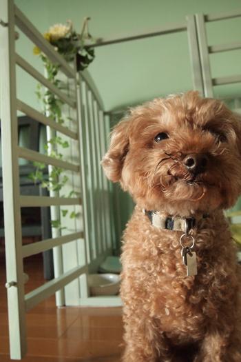 ベビーベッドDIYリメイク犬のサークル