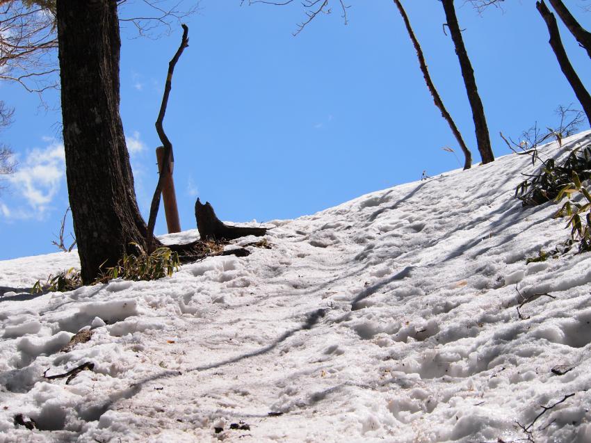 2012年 4月1日 雲取山 41
