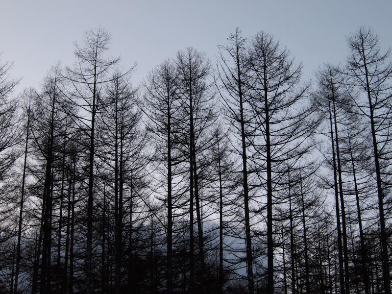 2012年 4月7日 金峰山 1