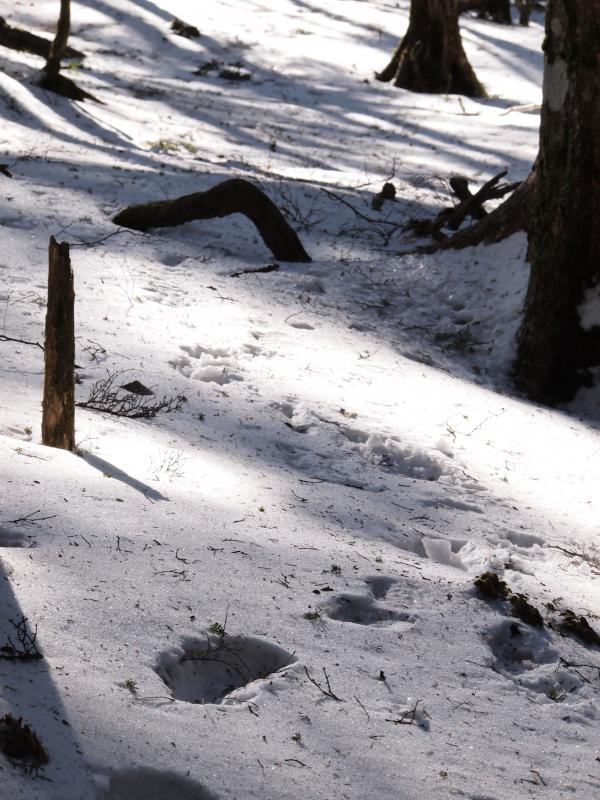 2012年 4月7日 金峰山 11
