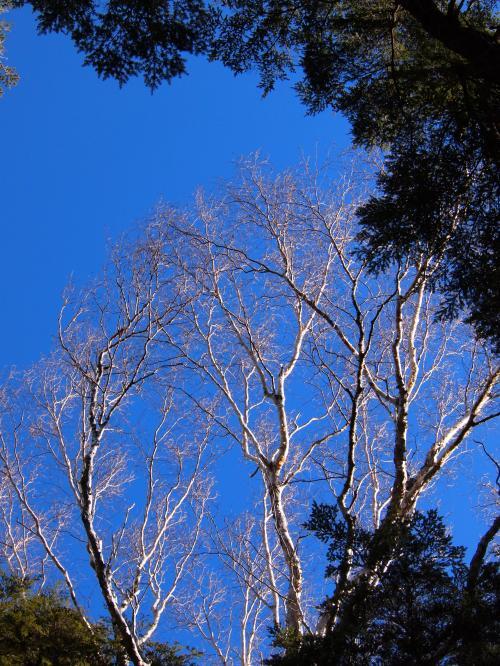 2012年 4月7日 金峰山 13