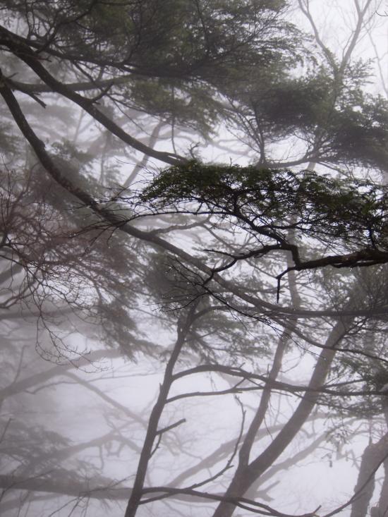 2012年 4月21日 長沢背稜  8
