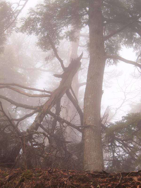 2012年 4月21日 長沢背稜  9