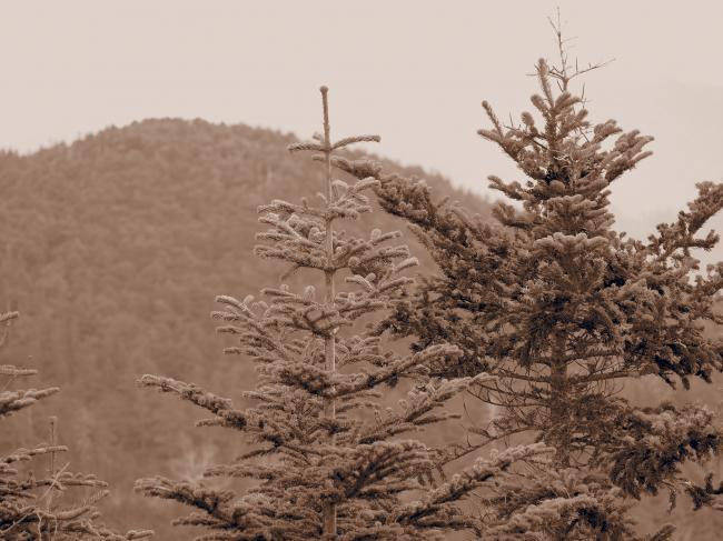2012  5 20  甲武信岳 17