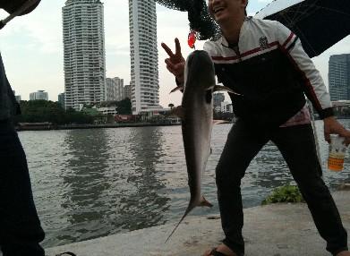アジアティック チャオプラヤー川画像 釣り