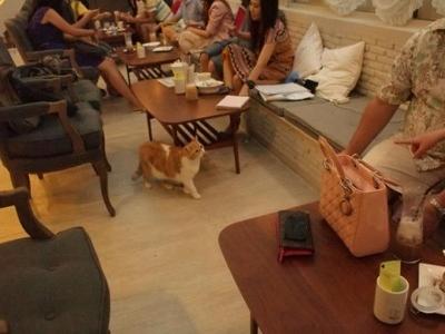 バンコク トンローの猫カフェ パーキャット・カフェ・クラブ写真