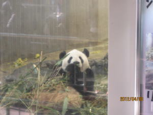 008 上野動物園 パンダ